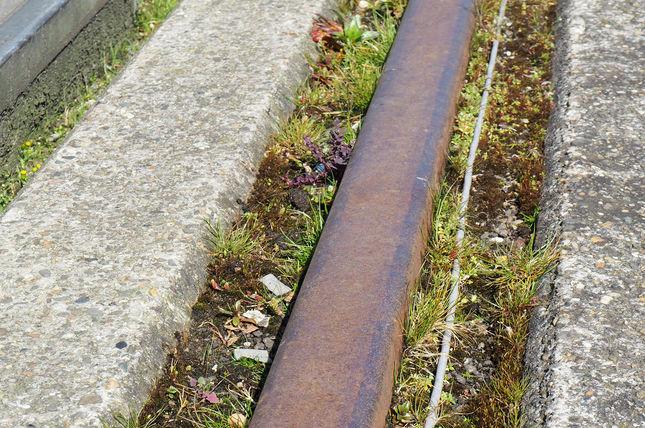 Graspollen tussen de tramrails. Credits: Anne van Kessel voor NEMO Kennislink